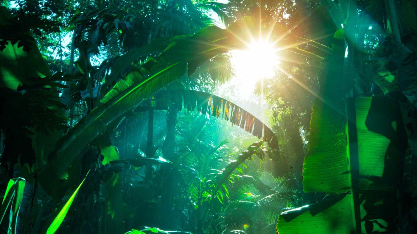 Sonne im Regenwald
